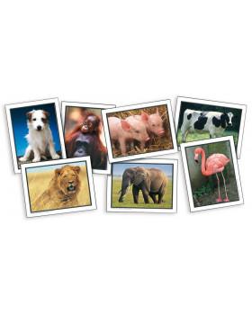 Állatok - fotók